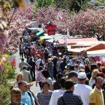 Publikum verändert sich: Kein Baumblütenfest in Werder